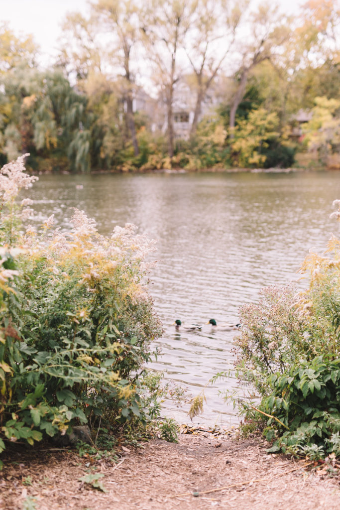 Mill Pond with ducks passing by